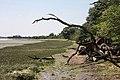 Fallen trees, River Stour - geograph.org.uk - 841135.jpg