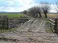 Farm Gate and Pollarded Willows - geograph.org.uk - 131782.jpg