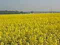 Farmland, Ruscombe - geograph.org.uk - 799235.jpg
