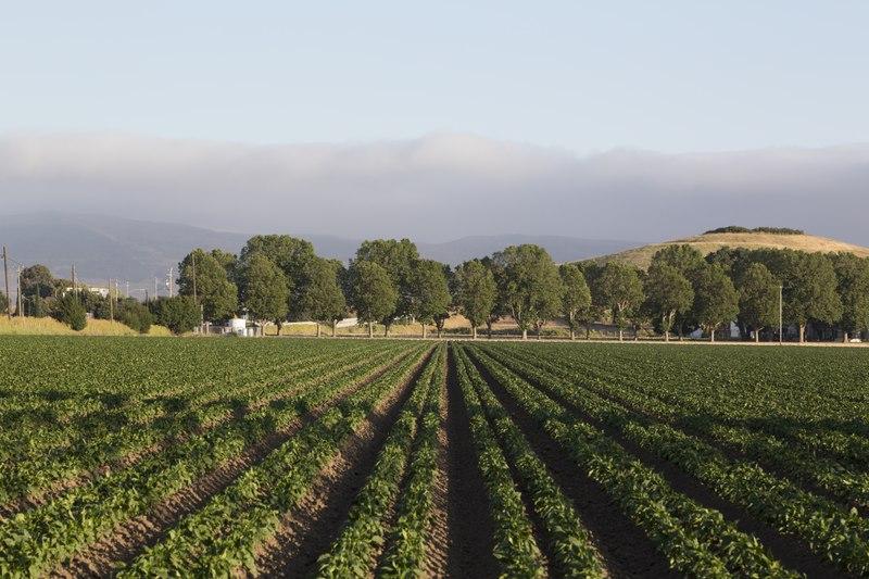 Farmland in the countryside of the Paso Robles-Templeton-Alacadero region, California LCCN2013633343