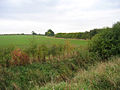 Farmland west of Great Lane, Clophill, Beds - geograph.org.uk - 64928.jpg