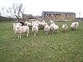 Feed me^ - geograph.org.uk - 344679.jpg
