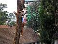 Felling trees 9.jpg