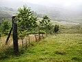 Fence Corner, Near West Tempar - geograph.org.uk - 1446701.jpg