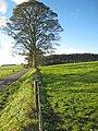 Fence line - geograph.org.uk - 271483.jpg