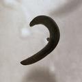 Figure 20 (PeerJ 4672) - Diversibipalium black.png