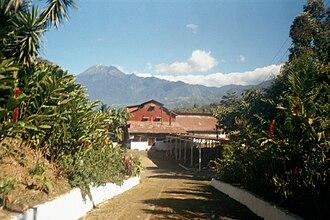 San Marcos Department - Finca El Platanillo coffee plantation, with the Tajumulco volcano behind
