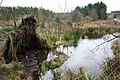 Fire Pond, Boltby Forest - geograph.org.uk - 310954.jpg