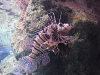 Fish Aquarium Barcelona.jpg