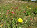 Fleurs départementale 147.jpg