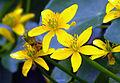Flickr - Nicholas T - Gold Blooms.jpg