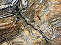 Flickr - brewbooks - Ant on metamorphosed banded chert.jpg