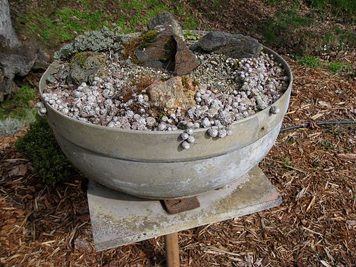 Flickr - brewbooks - Creative Pot - Glendale Rock Garden