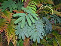 Flickr - brewbooks - Unknown fern.jpg