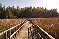 Floating Boardwalk - panoramio.jpg