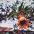 Flor Romã.jpg