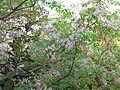 Flora IMG 3789.JPG
