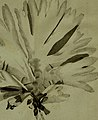 Flora scotica- or, A systematic arrangement, in the Linnæan method, of the native plants of Scotland and the Hebrides (1777) (14578741137).jpg