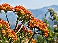 Flores na Pedra do Baú.jpg