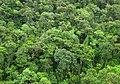 Floresta-atlantica.jpg