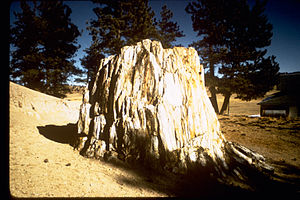 Florissant Fossil Beds National Monument FLFO1233.jpg