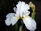 Flower, Fryšták (1).jpg