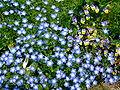 Flower-center134343.jpg