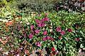 Flower @ Parc Floral @ Paris (30157232265).jpg