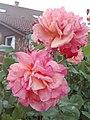 Flower Dortmund 11.jpg
