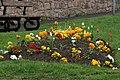Flower bed in Wooler - panoramio.jpg