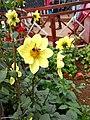 Flower with honeybee.jpg
