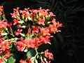Flowers (224).jpg