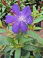 Flowers - Uncategorised Garden plants 17.JPG