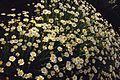Flowers 0016a.jpg