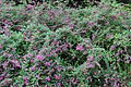 Flowers at Chiba Port Park (29939772841).jpg