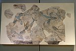 Flying fish from Phylakopi, Wall painting, 16th or 17th century BC, NAMA 5844, 190952.jpg