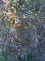 Foliage (4914226734).jpg