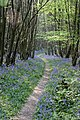 Footpath, Crowhurst Wood - geograph.org.uk - 457455.jpg