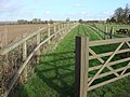 Footpath to the north of Borley - geograph.org.uk - 708655.jpg