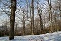 Forêt départementale de Beauplan sous la neige 2012 15.jpg
