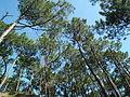 Forêt de Suzac.JPG
