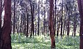 Forêt urbaine yaoundé1.jpg
