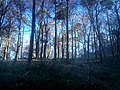 Forest - panoramio (69).jpg
