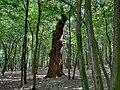 Forest - panoramio - paulnasca (82).jpg