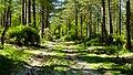 Forest Light (7442661458).jpg
