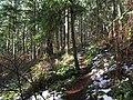 Forest Path Of John Dean Prov. Park - panoramio.jpg