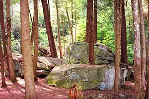 Garrett County, Maryland - Forest in Swallow Falls State Park
