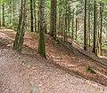 Forest in Morzine (2).jpg