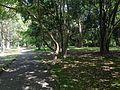 Forest in Usa Shrine 1.JPG