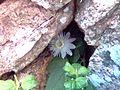 Foto(66) Flor Caatinga - Nordeste Brasil - Itiúba - Ba - Brasil.jpg